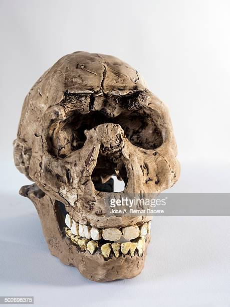 Playing the fossil skull of a child, Homo Eroaster