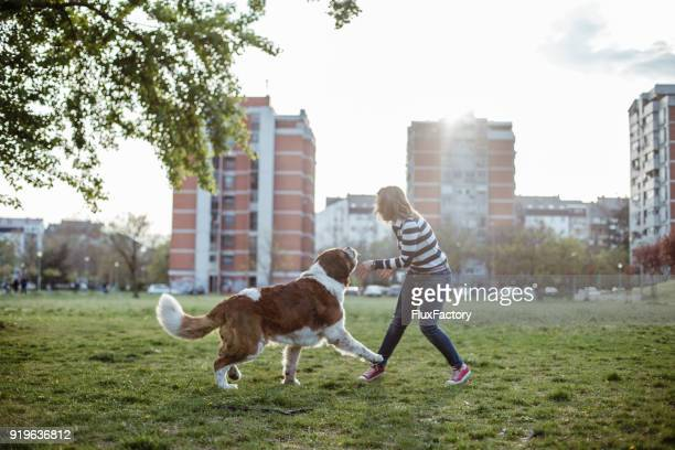 playing with a dog - animals attacking stock pictures, royalty-free photos & images