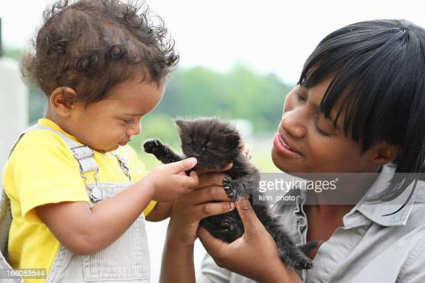 playing with a kitten - black cat stock photos and pictures