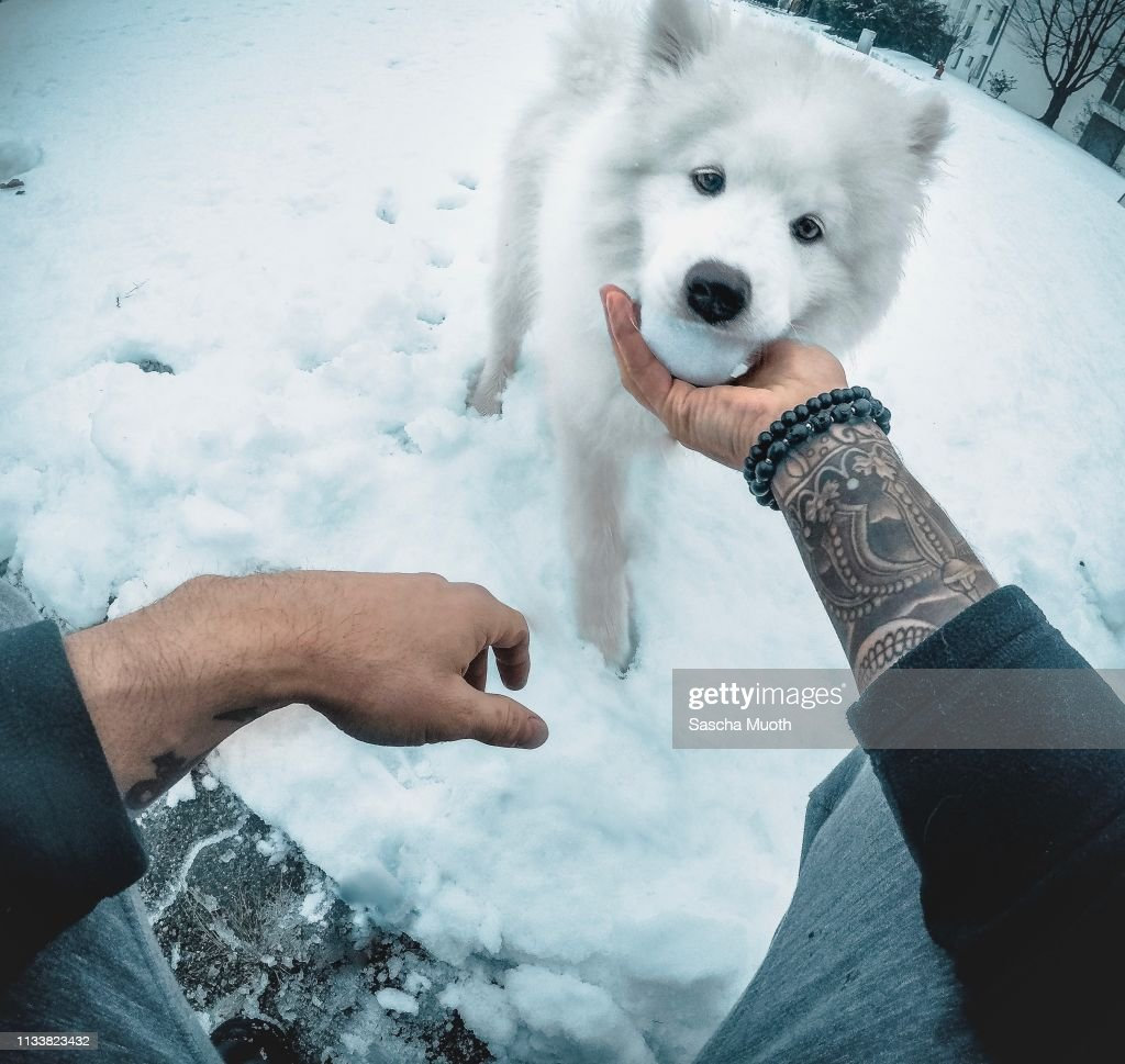 playing with a puppy : Stock Photo