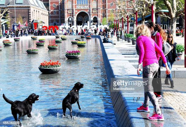 playing with dogs in park. - museumplein stock pictures, royalty-free photos & images