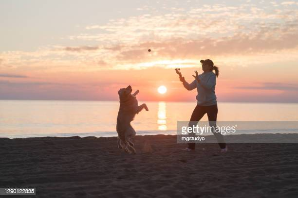 playing with my dog at the beach. - one animal stock pictures, royalty-free photos & images