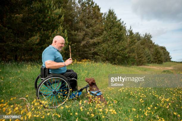 playing with my dog in the park - animal behaviour stock pictures, royalty-free photos & images