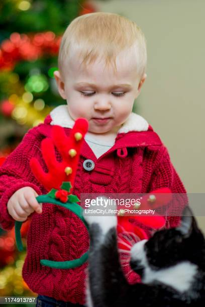 playing with the cat on christmas - cat with red hat stock pictures, royalty-free photos & images