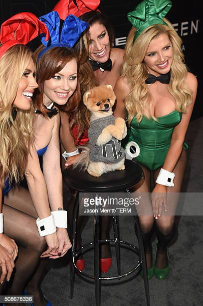 Playmates Kayla Rae Reid Kimberly Phillips Jiff the Pomeranian playmates Crystal McCahill and Stephanie Branton arrive at The Playboy Party during...