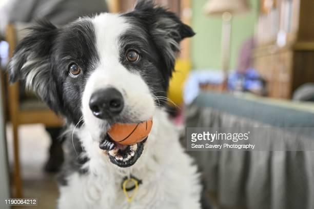 playtime - イヌのおもちゃ ストックフォトと画像