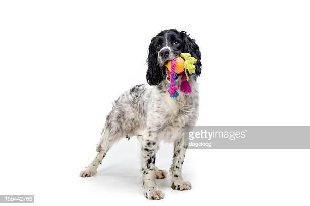 プレイタイムます。 - イヌのおもちゃ ストックフォトと画像
