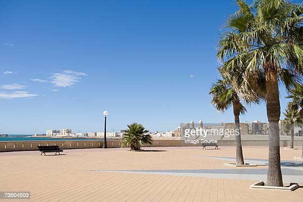 Plaza con palmeras