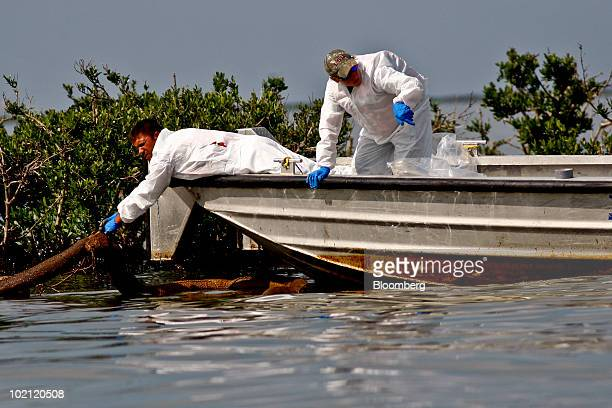 BP Plc contractor workers pull up an oilsoaked absorbent boom in Bay Ronquille off the coast of Grand Isle Louisiana US on Tuesday June 15 2010 The...