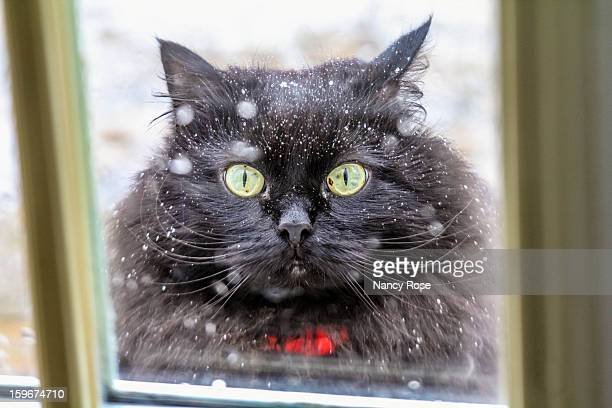 please mom, it's cold out here! - bedford nova scotia stock pictures, royalty-free photos & images