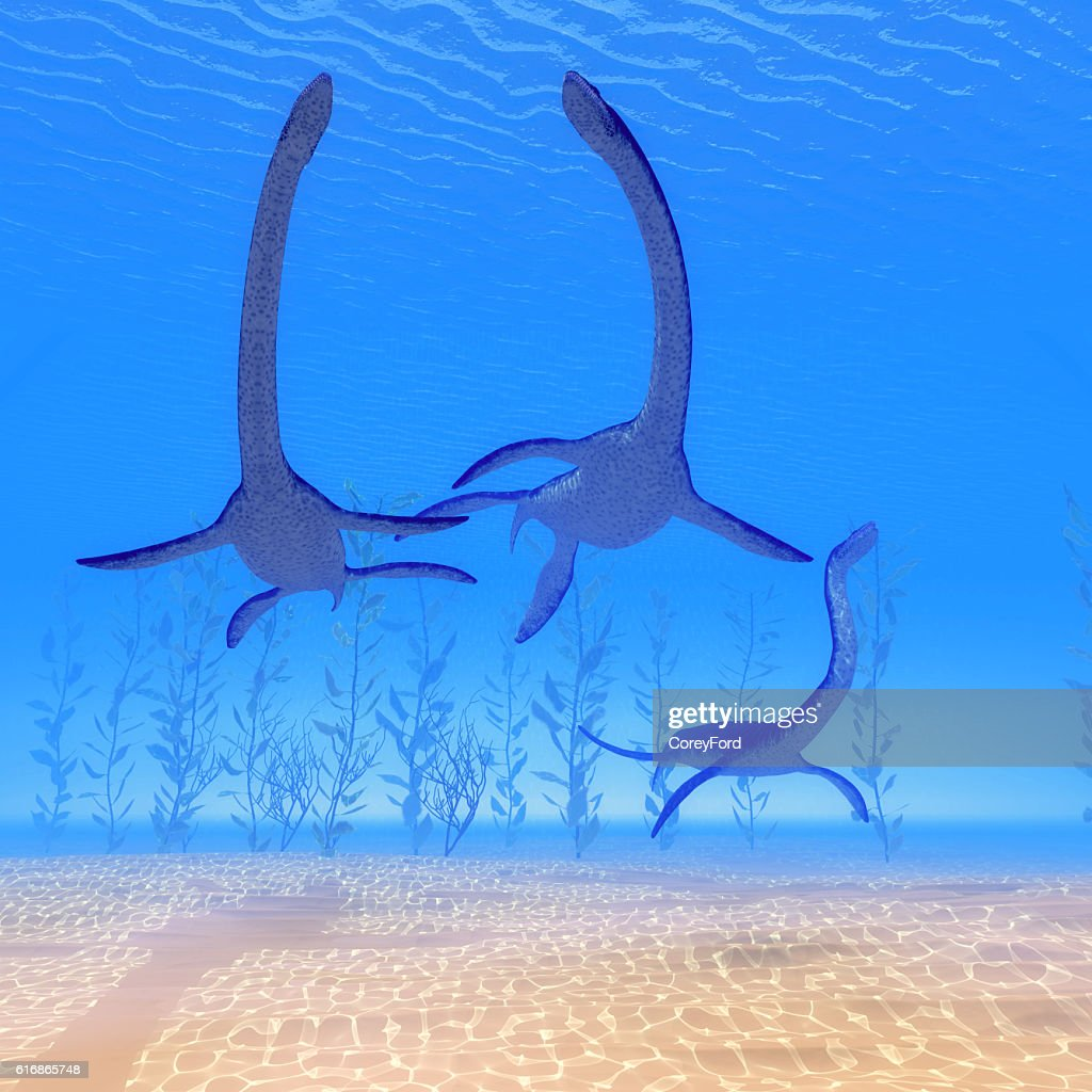 Plesiosaurus Reptiles Undersea : Stock Photo