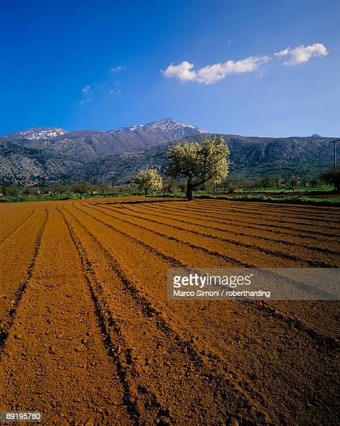 ploughed field with trees and mountains, lassithi plateau, crete, greek islands, greece, europe - altopiano foto e immagini stock