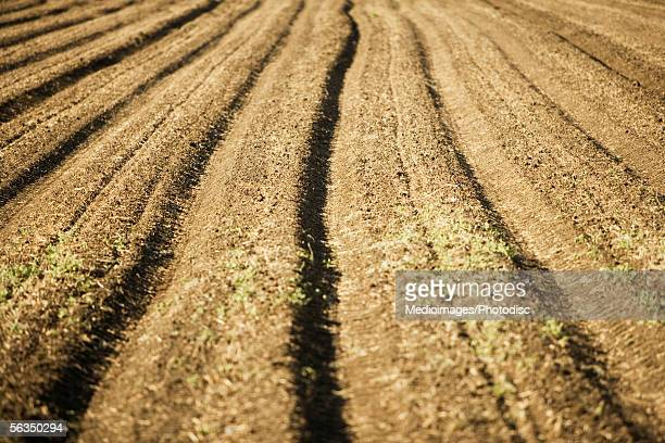 Ploughed rows in a field, California, USA