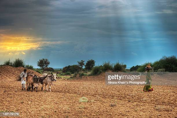 ploughing - sind stock photos and pictures