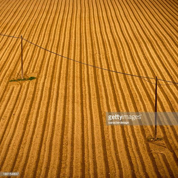 Plowed field with telephone cables crossing it