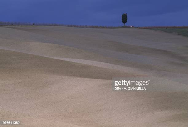 Plowed fields with solitary Cypress tree near Montalcino Val d'Orcia Tuscany Italy
