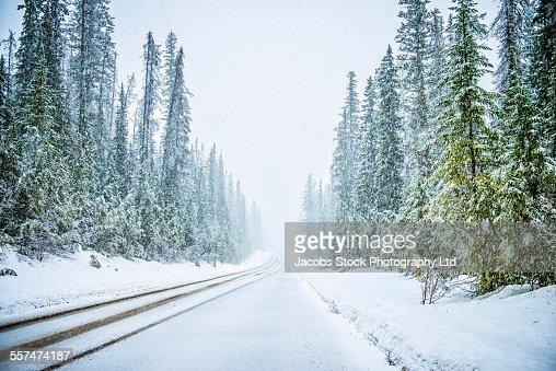 Plowed road in snowy forest