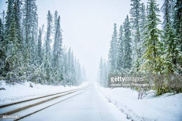 Plowed road in snowy forest