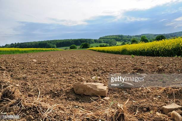 Plowed rocky farmland stony soil between canola fields