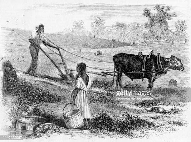 Plowing in South Carolina, Engraving from a Sketch by Jas. E. Taylor, Frank Leslie's Illustration Newspaper, 1866.