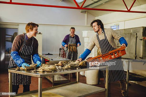 plucking pheasants at smokehouse - food contamination stock photos and pictures