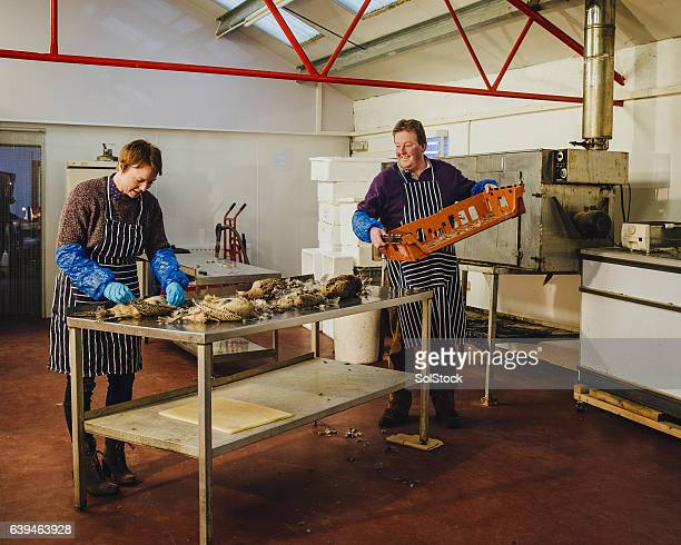 plucking pheasants at smokehouse - budgivning bildbanksfoton och bilder