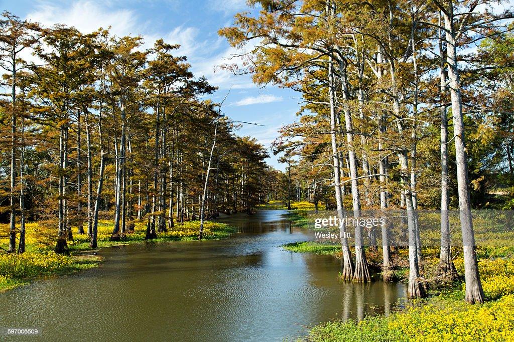 Plum bayou in eastern arkansas stock photo getty images plum bayou in eastern arkansas stock photo freerunsca Gallery