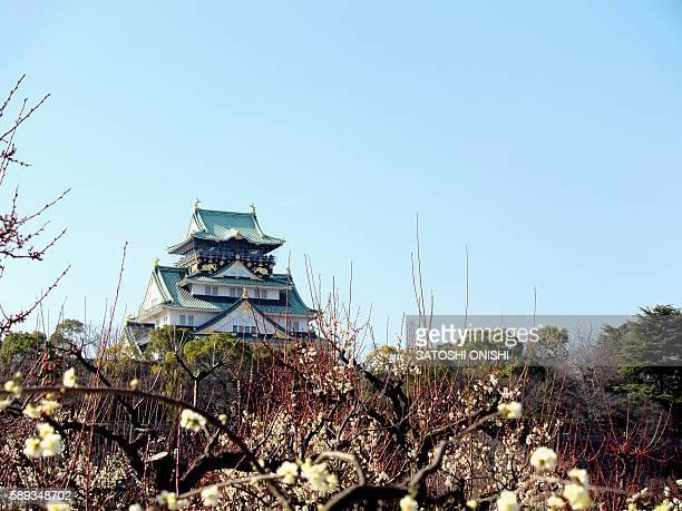 Plum Blossoms and Osaka Castle