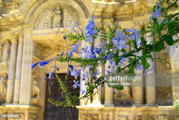 Plumbago flowers and in the background the facade of La Cartuja de Jerez