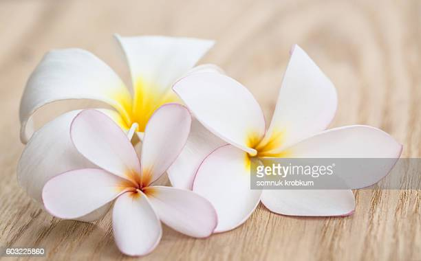 Plumeria flower on wooden plate