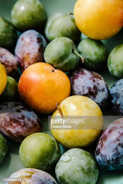 plums - harvest table stock pictures, royalty-free photos & images