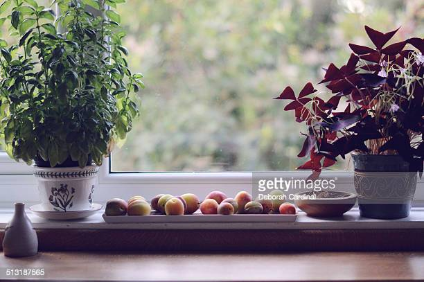 Plums ripening by a window