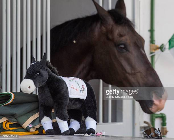 Plush horse is placed in front of a real one at the Irish riding team's stables at the Olympic Equestrian Centre in Rio de Janeiro on August 4 ahead...