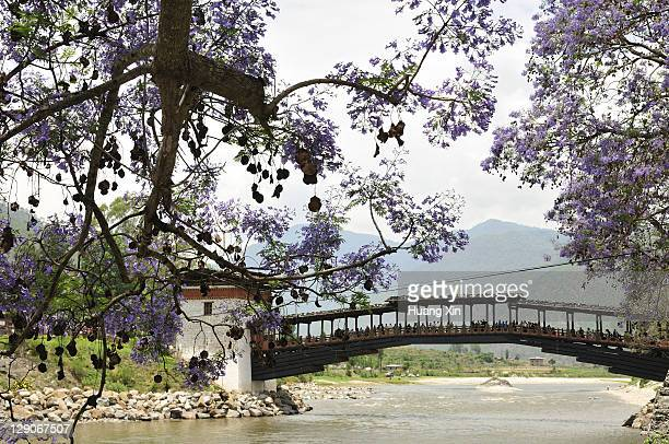 pochu and mochu river beside punakha dzong, bhutan - プナカ ストックフォトと画像