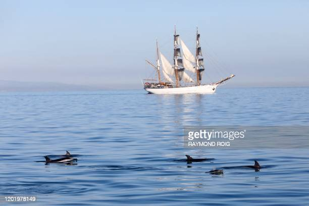 Pod of striped dolphins swim past a barque off the coast of Collioure, southern France on February 20, 2020.