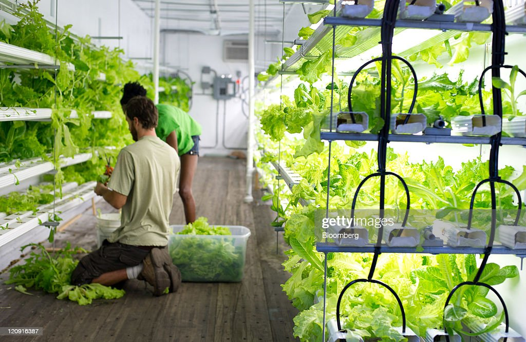 Atlanta Grows Lettuce In Freight Containers As Urban Farms Bloom : News Photo