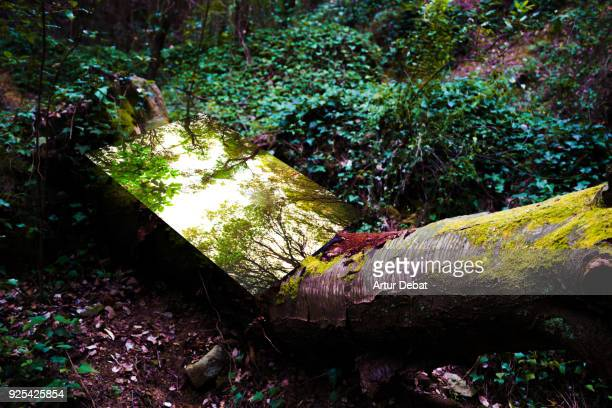 poetic picture of mirror reflection in the nature creating nice visual effect. - installation art stock pictures, royalty-free photos & images