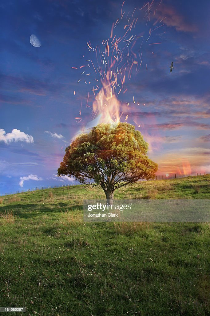 Pohutukawa tree on fire on a field : Stock Photo