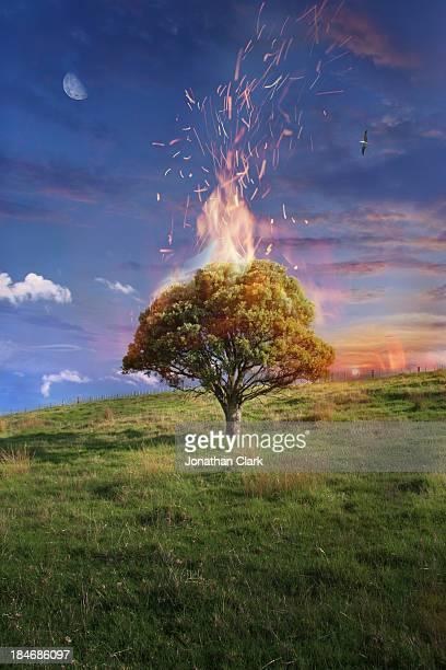 Pohutukawa tree on fire on a field