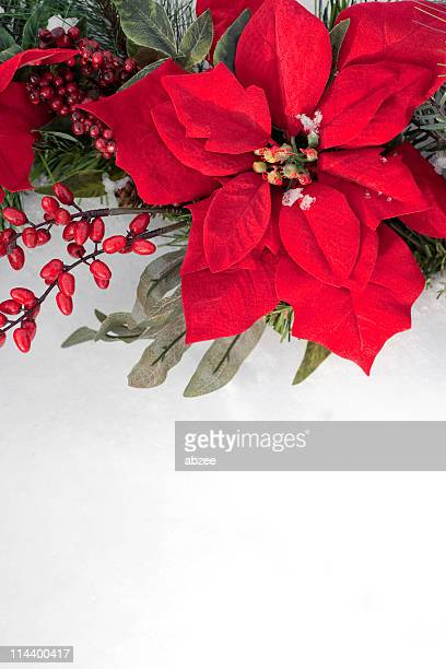 poinsettia and berry christmas wreath against snow background - christmas star stock photos and pictures