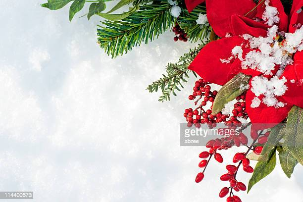 poinsettia and berry christmas wreath against snow background - poinsettia stock photos and pictures