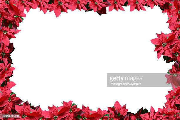 poinsettia flower frame - christmas star stock photos and pictures
