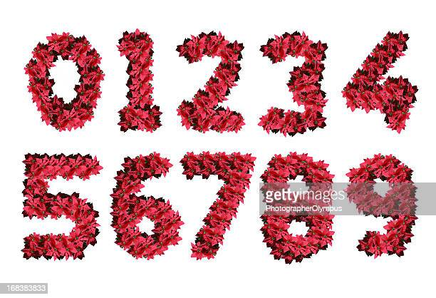 poinsettia numbers - number 2 stock pictures, royalty-free photos & images