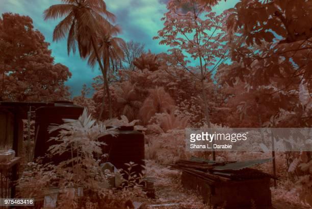 point fortin, trinidad and tobago - paisajes de trinidad tobago fotografías e imágenes de stock
