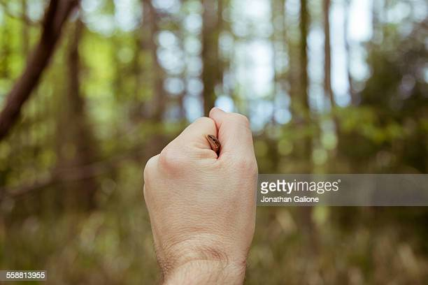 Point of view shot of a man holding a lizard