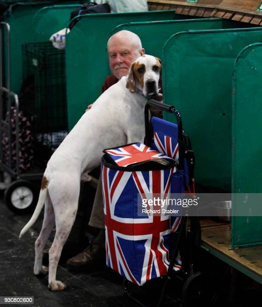 Pointer gundog on day four of the Cruft's dog show at the NEC Arena on March 11 2018 in Birmingham England The annual fourday event sees around 22000...