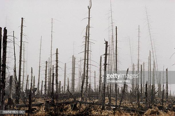poland, karkonosze mountains, dead forest from acid rain pollution - acid rain stock photos and pictures