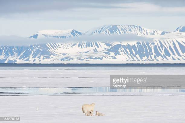 Polar Bear and Cubs on Arctic Sea Ice