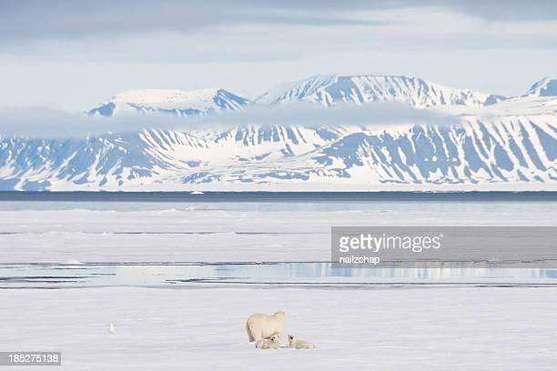 Polar Bear Cubs In arktischen Meer und Eis