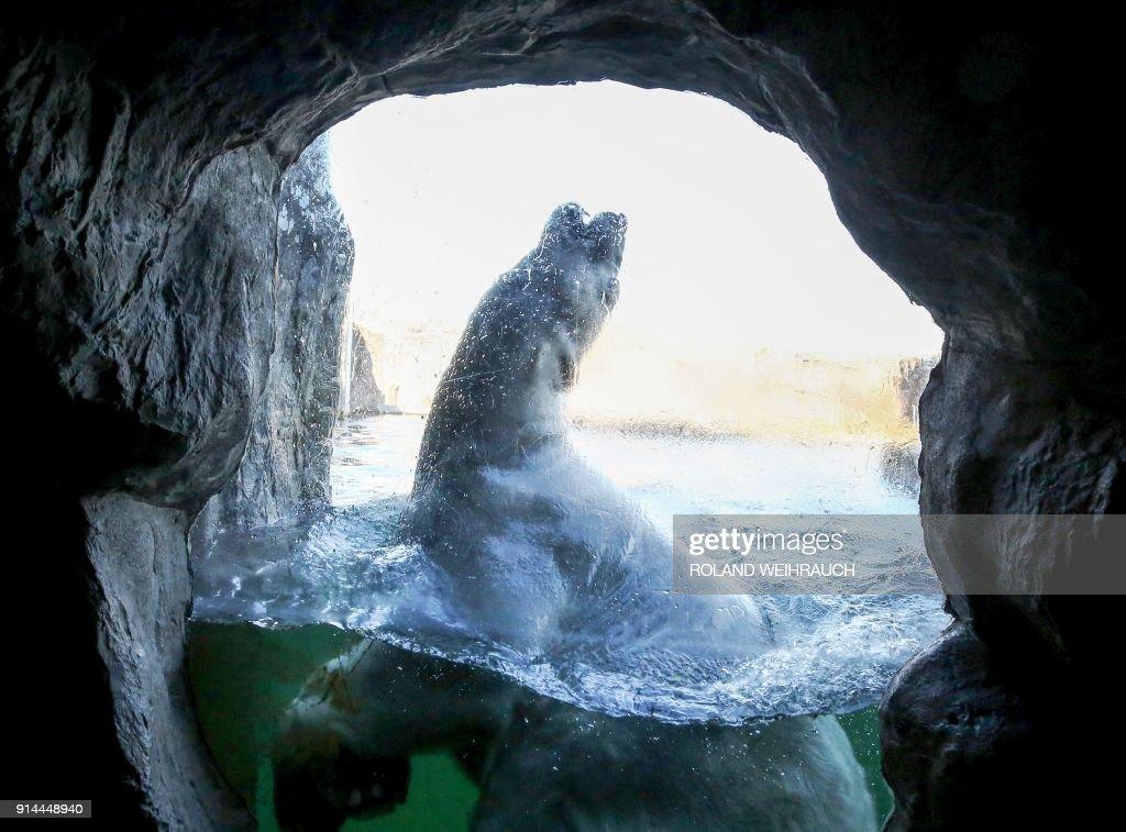 TOPSHOT-GERMANY-ANIMALS-POLAR BEAR : News Photo